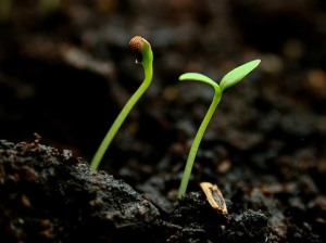 seed_sprout