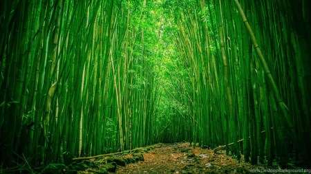 163959_gallery-for-bamboo-forest-hd-wallpapers_2560x1600_h